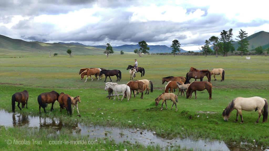 Chevaux et cavalier mongol