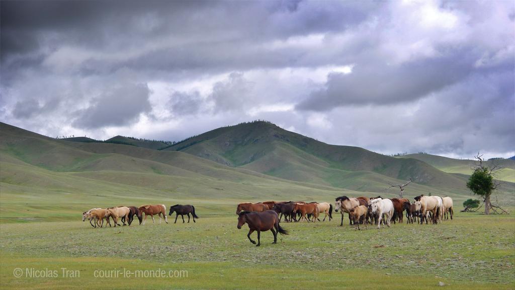 Chevaux, parc national de Terlj, Mongolie